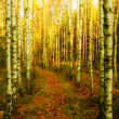 Sunny forest alley — Stock Photo