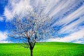 Blossoming tree — Stock Photo