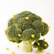 Broccoli trees — Stock Photo #2842453
