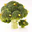 Broccoli trees — Stock Photo #2842557