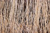 Wild grass — Foto de Stock