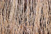 Hierba salvaje — Foto de Stock