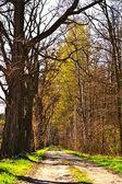Trees — Fotografia Stock