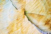 Wood — Fotografia Stock