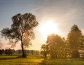 Trees — Stockfoto