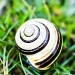 蜗牛 — 图库照片 #4539073