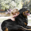 Girl with dog - Stockfoto