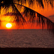 Royalty-Free Stock Photo: Coconut sunset