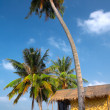 In the tropic — Stockfoto