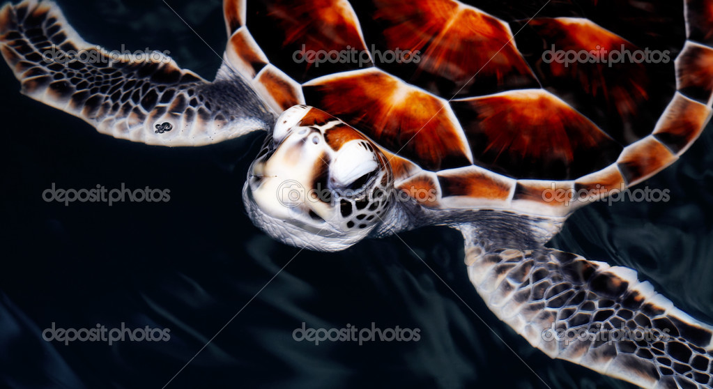 View of nice sea turtle flying in the ocean  abyss — Stock Photo #2899617