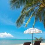 Tropic chairs — Stock Photo
