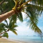 Coconut paradise — Stock Photo #2900855