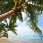 Coconut paradise — Stock Photo