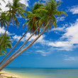 Tropic palms — Stock Photo