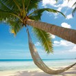Stock Photo: Palm and hammock