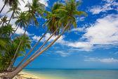 Tropic palms — Stock Photo