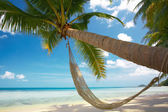 Palm and hammock — Stock Photo
