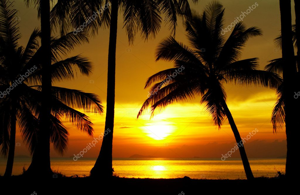 View of palms black outlines during sunset on the beach — Stock Photo #2900643