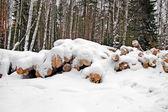 Harvested wood — Stok fotoğraf