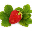 Strawberries on green leaves_1 — Stock Photo