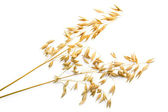 Stalks of oats — Stock Photo