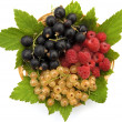 Currants and raspberries in the basket — Stock Photo