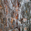 Stock Photo: Old oak bark