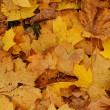 Background made of autumn leaves - Stock Photo