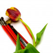Tulip and art bruhes — Stock Photo