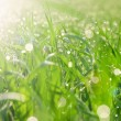 Patches of light from dew on a grass — Stock Photo