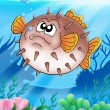 Balloonfish with bubbles — Stock Photo