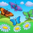 Butterflies on meadow — Stock Photo