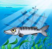 梭子鱼与沉船 — 图库照片