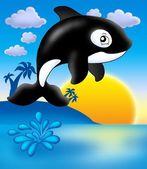 Orca con puesta de sol — Foto de Stock