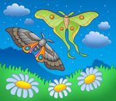 Papillons de nuit sur la prairie — Photo