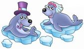 Wedding with cute seals — Stock Photo