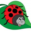Cute ladybug on leaf vector illustration — Stock Vector