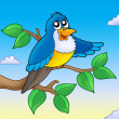 Cute blue bird on branch — Stock Photo