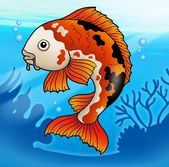 Red koi fish in water — Stock Photo