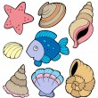 Various shells and fish collection — Stock Vector #3040516