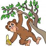 Monkey with banana on tree — Stock Vector #3208635