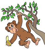 Monkey with banana on tree — Stock Vector