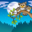 Cute owls on branch at night — Stock Photo