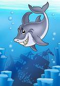 Köpekbalığı ile gizemli batık — Stok fotoğraf