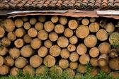 Pnie drzew — Zdjęcie stockowe