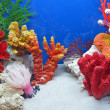 Stok fotoğraf: Underwater colorful stones, color divers