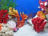 Underwater colorful stones, color divers — Stok fotoğraf