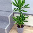 Green plant with leafs, interior design — Stock Photo