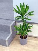 绿色的植物与枫叶,室内设计 — 图库照片