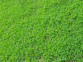 New green grass, nature, environment. — Stock Photo